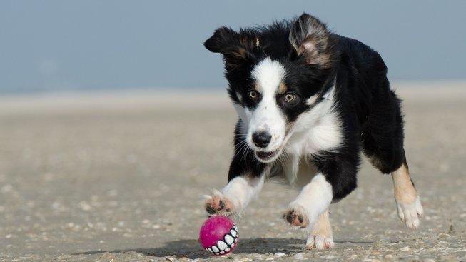 Lidé a psi mají společné podivné rysy psychiky