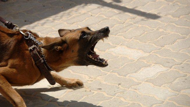Jak předejít tomu, aby vás pes pokousal