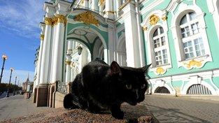 Kočky k Ermitáži patří tak nějak odnepaměti