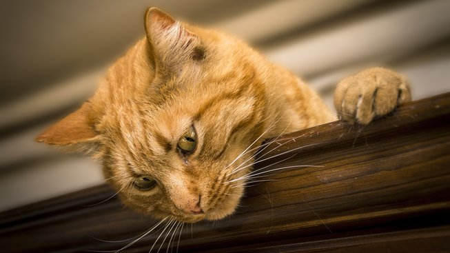 Je kočka mazlíček pro vás?