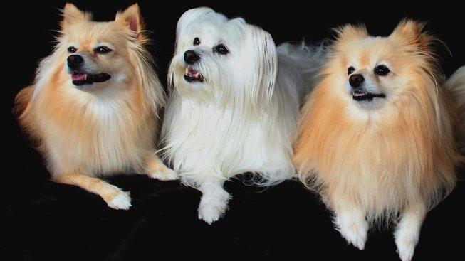 Poznejte psí uši a jejich zajímavosti
