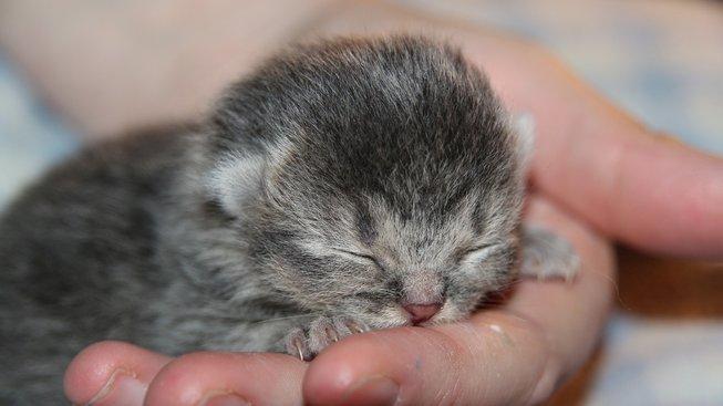 Opuštěná koťata: Co dělat, když je najdete