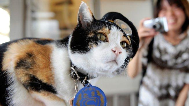 Kočka Tama: Z přednosty stanice manažerkou