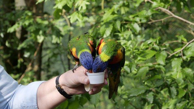 Papoušci jsou zábavní, ale nároční společníci