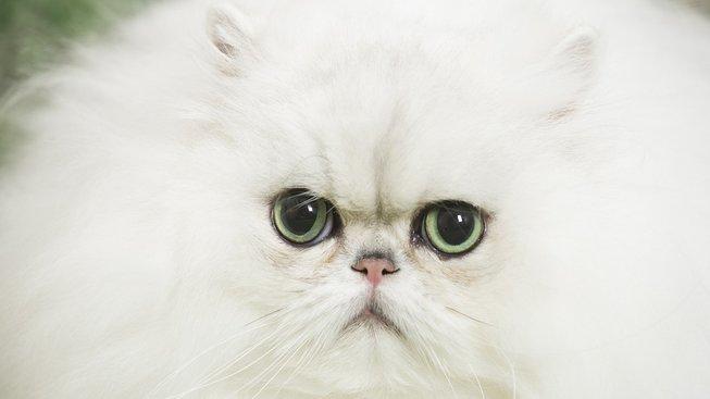 Kopa chlupů s překrásnýma očima