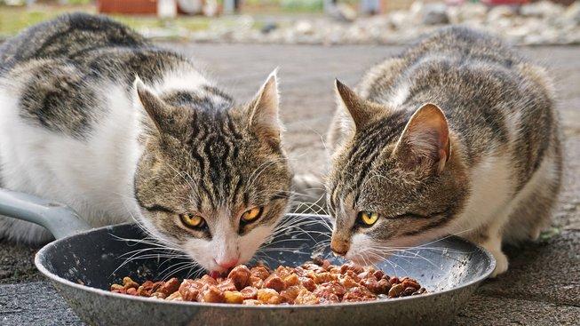 Jak kočkám vybírat krmivo?