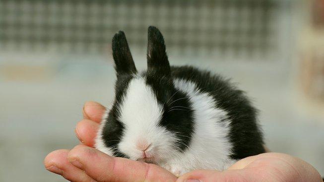 Je králík mazlíček pro vás?