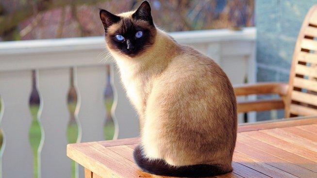 Kočky nahrazují ateistům boha, naznačuje studie