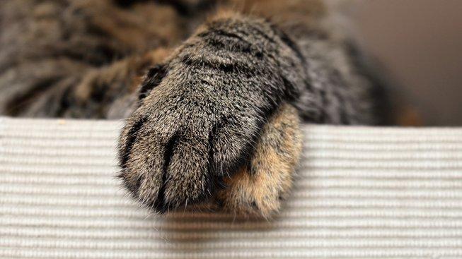 Záhada mléčného kroku aneb Proč do vás kočka zatne drápy
