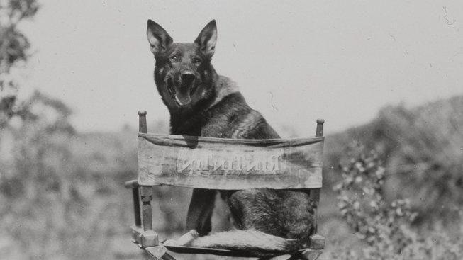 Rin Tin Tin: Pes, který změnil pravidla udělování Oscarů