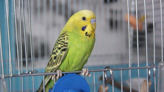 Co dělat, když vám prchne papoušek