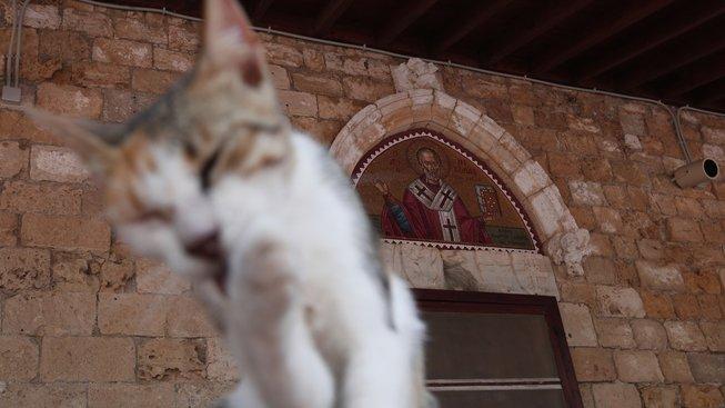Něžné vyznání středověkému kocourkovi