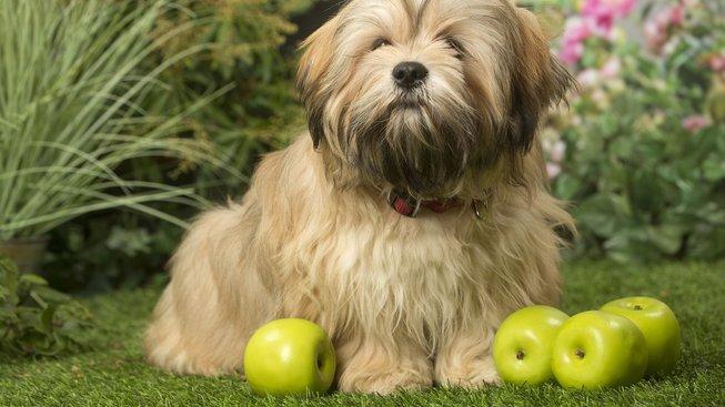 Ovoce, které psa může potěšit i zabít
