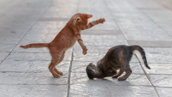 Videa s kočkami dodávají energii a zlepšují náladu