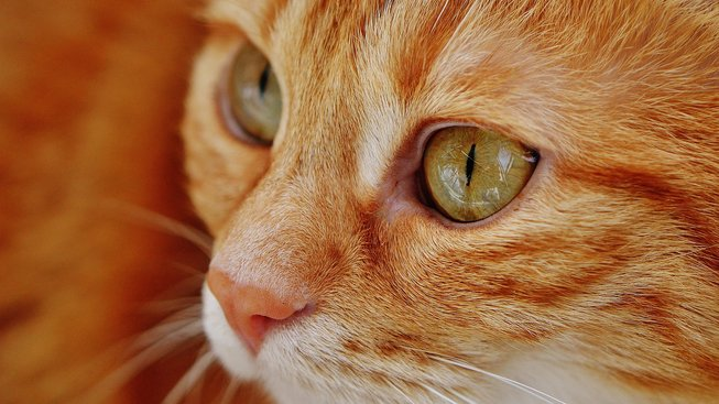 Zakopává vaše kočka? Možná má šedý zákal