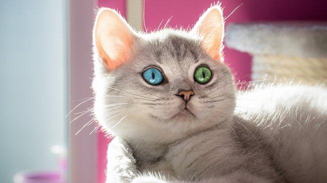 Chiméra? Místo tříhlavé saně nádherná kočička