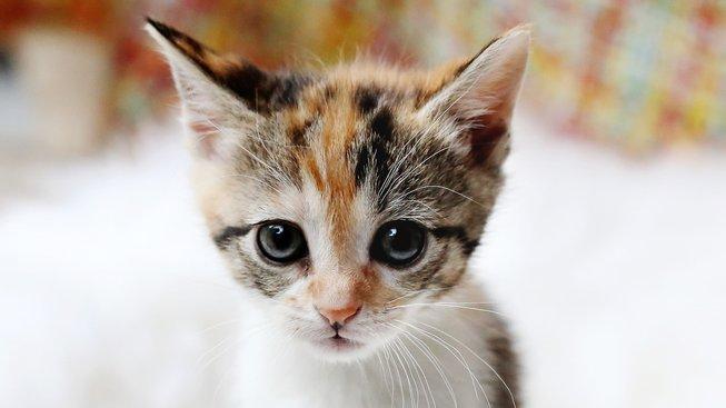 Mohou kočky plakat?
