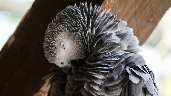 Pták, který nadával na pohřbu exprezidenta