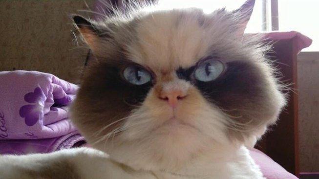 Grumpy Cat má náhradníka. Mračí se ještě víc