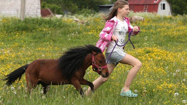 Miniaturní koně: Kapesní mazlíčci do obýváku s elegancí klasického koně