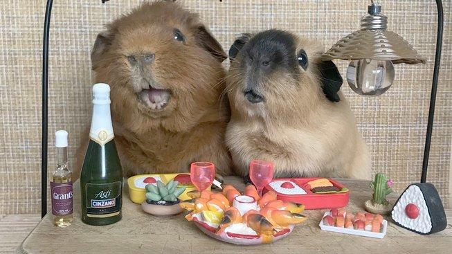 Dovolená i hody: 'Dobrodružství' malých zvířátek