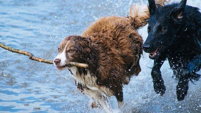Zelené smrtící nebezpečí, co číhá na psy ve vodě