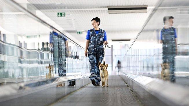 Sulimovův pes, unikát vyšlechtěný speciálně pro moskevské letiště
