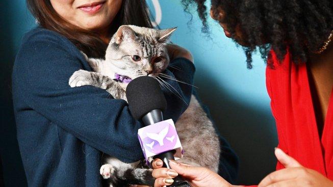 Seznamte se s Nalou, nejslavnější kočkou internetu