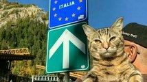 Kočka a papoušek na cestách