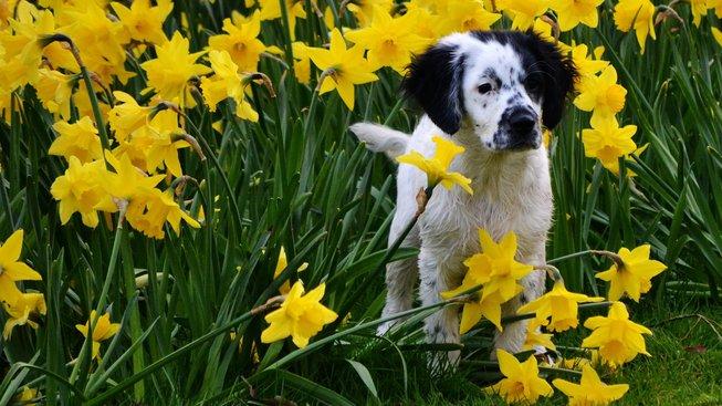 Největší nástrahy jara pro vaše mazlíčky