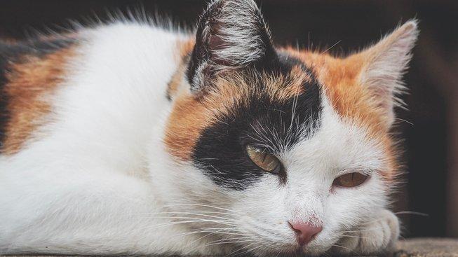 O stárnutí koček