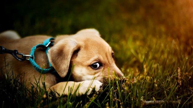 Proč vás pes nechce na procházku?