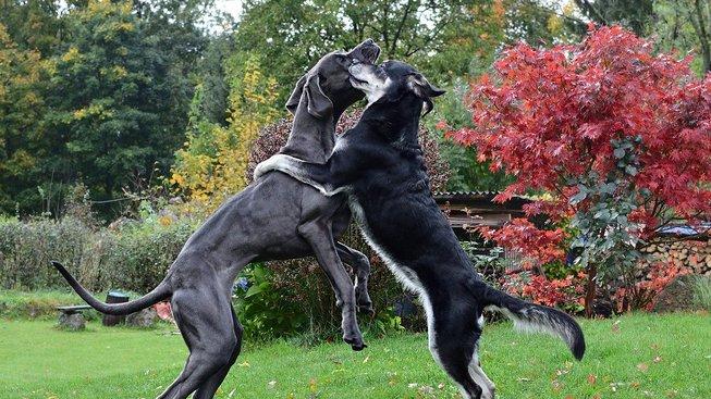 Jak řešit rivalitu mezi psy?