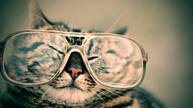 Život se slepou kočkou
