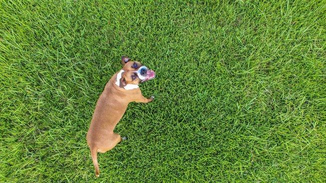 Jak vyvenčit psa, když nemůžete ven?