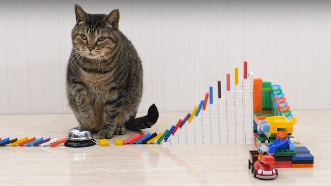 Kočičí hrátky s dominem