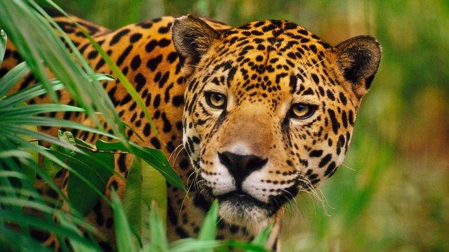 Neuvěřitelně podobná zvířata. Dokážete je rozeznat?