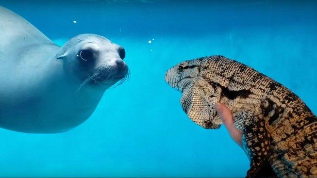 Nečekané zvířecí přátelství, které vzniklo přes sklo