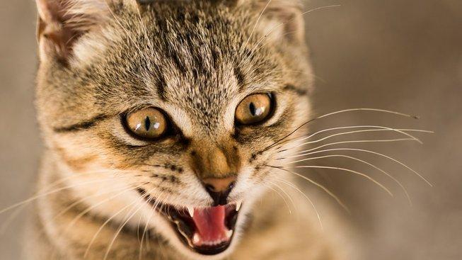 Některé kočky se rozhodně nechtějí kamarádit