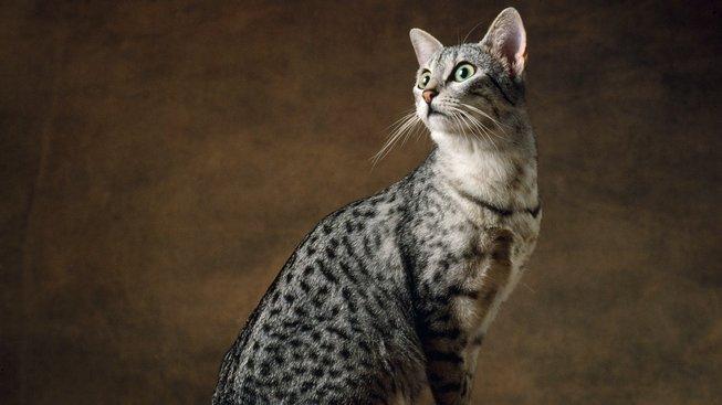 Jaká je nejstarší kočka na světě?