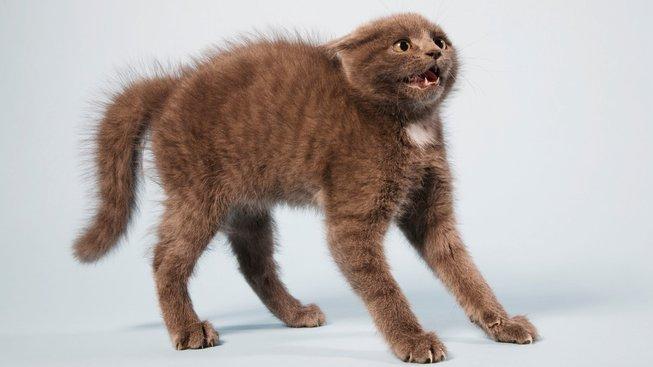 Proč se kočky tak moc děsí okurek?