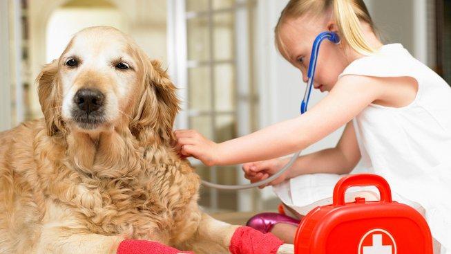 Kdy je dobré obrátit se na veterináře?