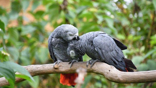 Papoušci žako se umí nesobecky podělit