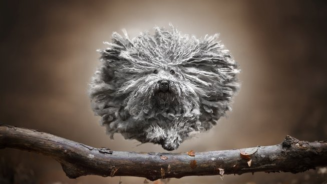 Hop přes překážku! Podívejte se na úchvatné fotky psů v akci