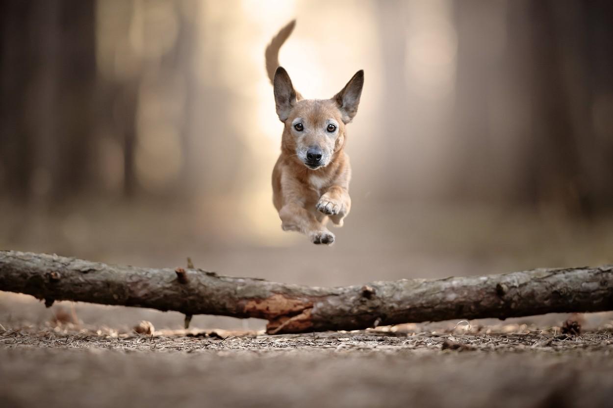 Létající psi