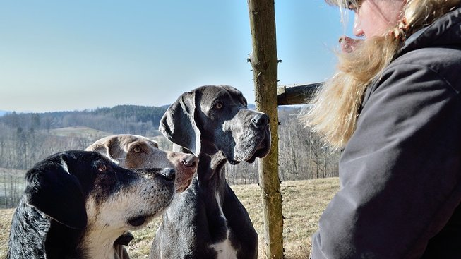 dogs-3181697_1280