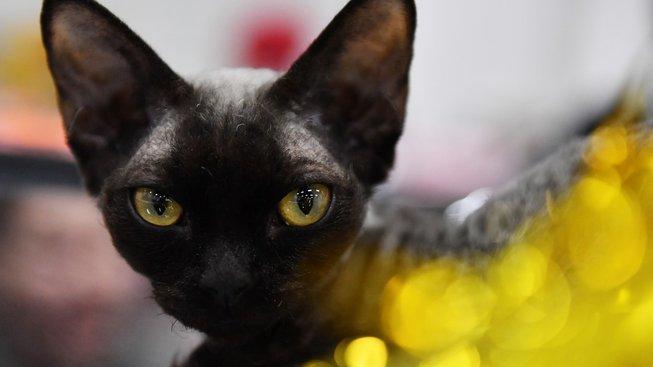 'Chrt mezi kočkami': Miluje hry a je velmi inteligentní