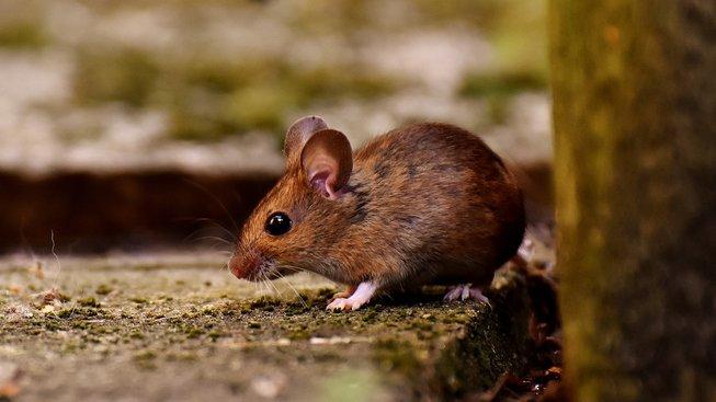 Když myška uklízí