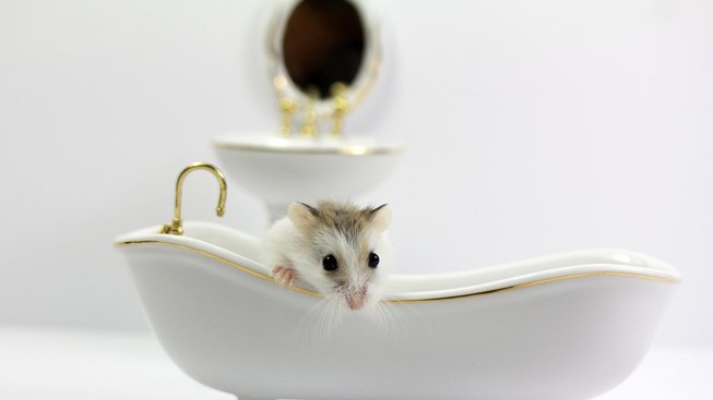 mouse-4624918_1280