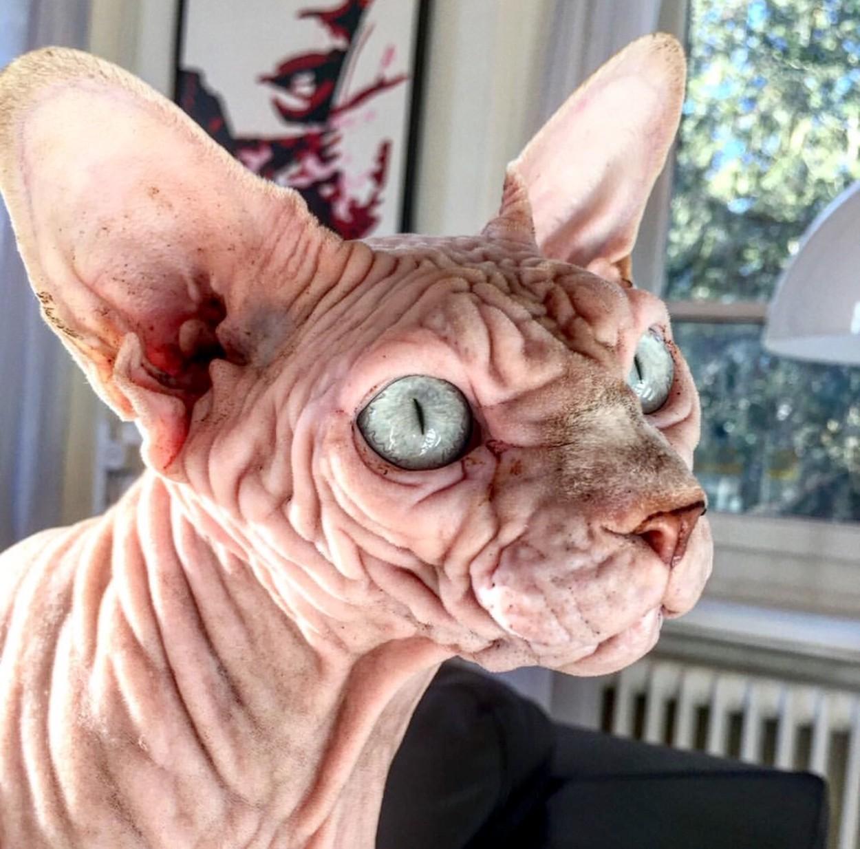 Nejděsivější kočka na světě